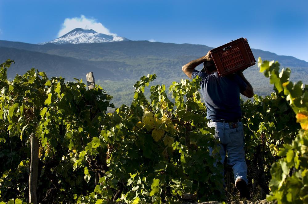 Etna vin