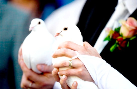 Фото - голуби